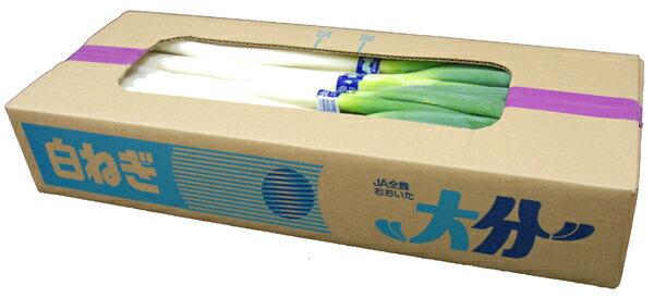 【箱売り】 白葱・深葱(白ねぎ・深ねぎ) 1箱(約300g×10束入り) 大分産・九州産 【業務用・大量販売】【RCP】