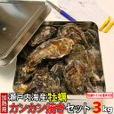 瀬戸内海産 牡蠣 カンカン焼きセット 3kg (1缶に約36個〜54個) 殻付き カキ かき 鮮魚 缶 BBQ ギフト