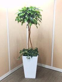 送料無料 観葉植物 光触媒 ベンジャミン H1700mm 防災グッズ タスカルグリーン 簡易トイレ 人工観葉植物 人工樹木 オフィス用