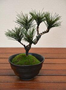 盆栽 ミニ盆栽 松 H170mm フェイクグリーン 観葉植物 人工観葉植物 造花 BONSAI ボンサイ