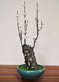 盆栽 梅 H420mm フェイクグリーン 観葉植物 人工観葉植物 造花 BONSAI ボンサイ