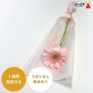 ★ガーベラ☆1本ラッピング★保水あり(10〜99本の注文)