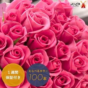 ◆色がえらべる◆バラ100本の花束 送料無料 いい夫婦の日 薔薇 ブーケ 記念日 誕生日 結婚記念 お祝い 入学 入園 還暦 癒し 赤 ピンク 黄色 ギフト プレゼント 切花 遅れてゴメン
