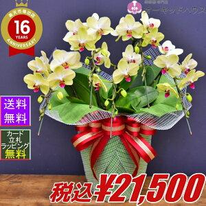胡蝶蘭フォーチュンザルツマンデラックス5本立ち開店祝い 昇進祝い 開業祝い 開店祝い 父の日2021 お中元 敬老の日2021