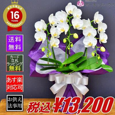 胡蝶蘭アマビリス3本立ち・お供えメイン