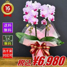 胡蝶蘭オリビア2本立ち