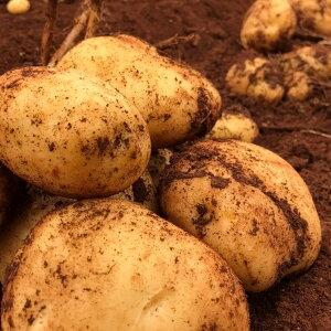 早旬!赤土ジャガイモ!!10kg 訳ありじゃがいも 3L以上 ビッグサイズ!!メークインよりも男爵 系のホクホクしたジャガイモです!赤土栽培のニシユタカを送料無料でお届けします!