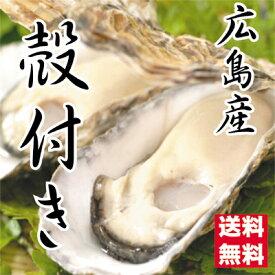 広島県産牡蠣 殻付きお徳用35個入 訳あり殻付き牡蠣(かき)(S〜Mサイズ)【送料無料】加熱用