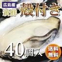 広島産  殻付き牡蠣(かき) 40個入り【送料無料】加熱用