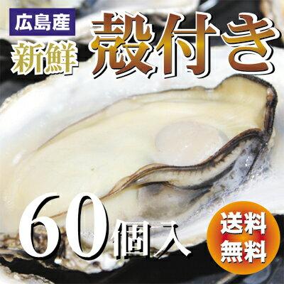 【送料無料】新鮮広島産生かき殻付き牡蠣(かき)【60個入り】【smtb-kd】
