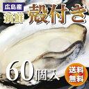 広島産生牡蠣 殻付き牡蠣(かき)60個入り【送料無料】