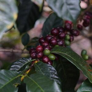 キノシタショウテン季節のコーヒー豆(200g)