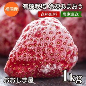 有機栽培 冷凍あまおう <送料無料・クール代込> いちご あまおう 福岡産 1kg(500g×2)農家直送 ブランド イチゴ 苺 フルーツ 果物 大嶌屋(おおしまや)