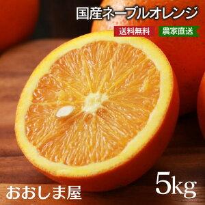 ネーブル 5kg 26玉前後 <3月上旬より順次出荷>ネーブルオレンジ 網田ネーブル 熊本県産 農家直送 送料無料 フルーツ 果物 大嶌屋(おおしまや)