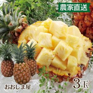 濃蜜 立派な 島パイン 3玉 パイン パイナップル ボゴールパイン(スナックパイン)ピーチパイン(ミルクパイン)農家直送 大嶌屋(おおしまや)