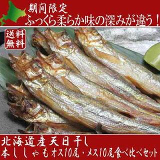 北海道産柳葉魚本ししゃもシシャモ[産直北海道]「シニア市場」海産物