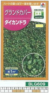 【芝草・牧草】グランドカバー ダイカンドラ[BLG609]/小袋(約1平方メートル)