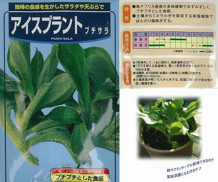 【世界の珍しい野菜】アイスプラント プチサラ/コート種子