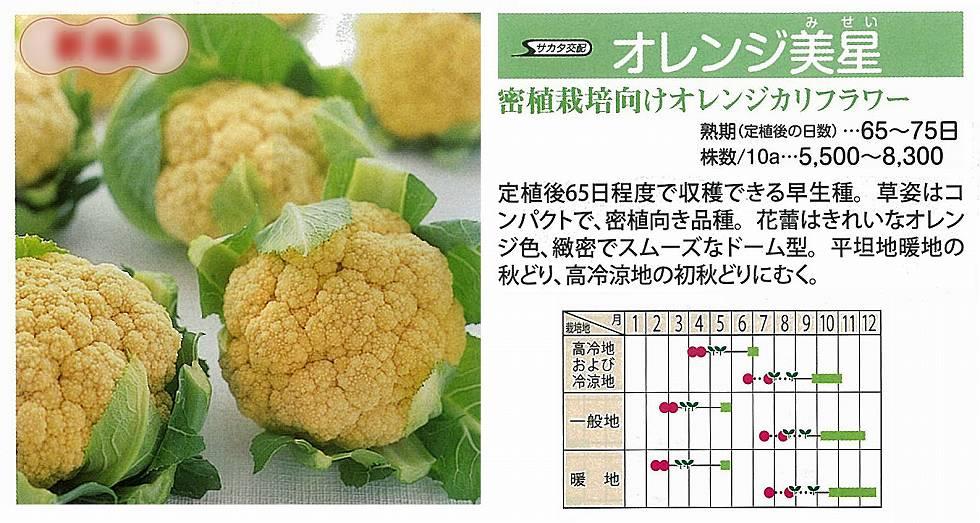 【カリフラワー】オレンジ美星〔サカタ交配〕/小袋