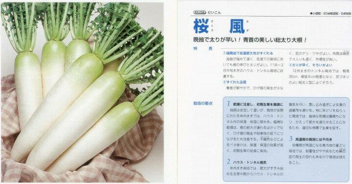 【ダイコン】桜風〔タキイ交配〕/小袋