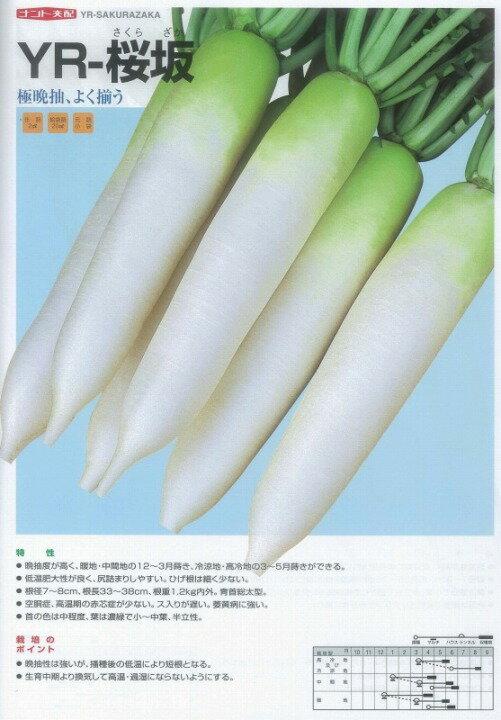 【ダイコン】YR桜坂〔ナント交配〕/小袋