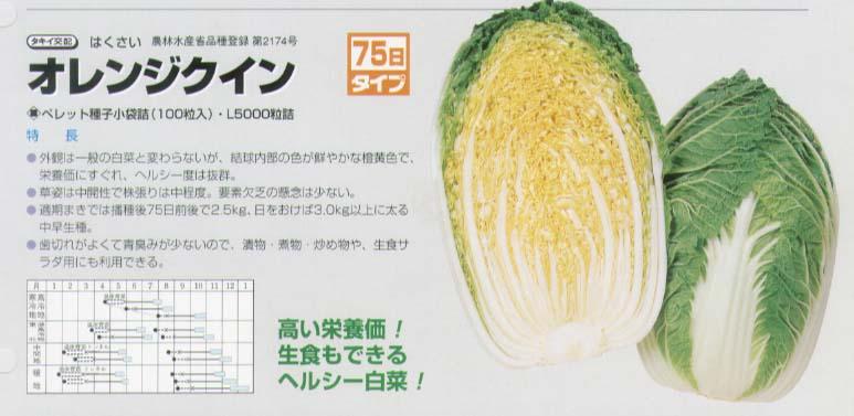 【ハクサイ】オレンジクイン〔タキイ交配〕/ペレット小袋100粒