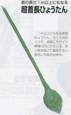 【ヒョウタン】超首長ひょうたん〔福井シード〕/小袋