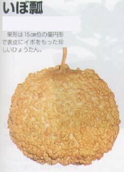 【ヒョウタン】いぼ瓢〔福井シード〕/小袋