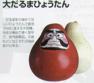 【ヒョウタン】大だるまひょうたん〔福井シード〕/小袋