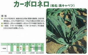 【キャベツ】カーボロネロ(黒キャベツ)〔マスダ育成〕/小袋