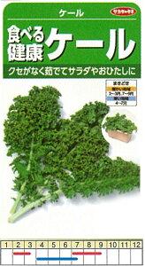【芽キャベツ・コールラビ・ケール】食べる健康ケール ケール〔サカタのタネ〕/小袋