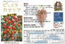 【ミニトマト】ピッコラカナリア(マウロの地中海トマト)〔パイオニアエコサイエンス〕/小袋