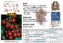 【ミニトマト】ピッコラルージュ(マウロの地中海トマト)〔パイオニアエコサイエンス〕/小袋