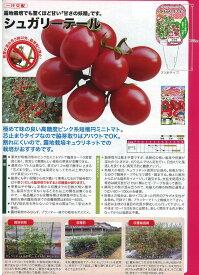 【ミニトマト】ミニトマト シュガリーテール〔一代交配〕/小袋
