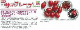 【ミニトマト】サングレープ〔ダイヤ交配〕/小袋