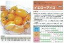 【ミニトマト】イエローアイコ〔サカタ交配〕/小袋