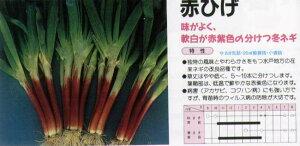 【ネギ】赤ひげ〔トキタ〕/小袋