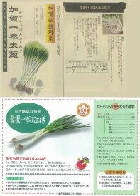 【ネギ】加賀一本太葱〔固定種〕/小袋