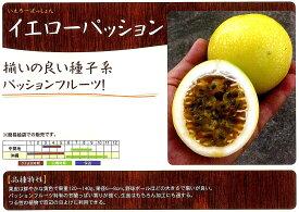【パッションフルーツ】イエローパッション〔フタバ種苗〕/小袋