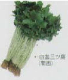 【その他の菜類】ミツバ 白茎三つ葉〔固定種〕/小袋