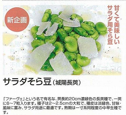 【ソラマメ】サラダそら豆〔丸種〕/小袋