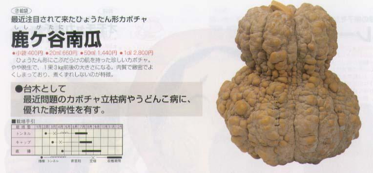 【特殊カボチャ】鹿ケ谷南瓜〔福井シード〕/小袋
