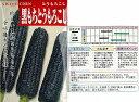 【トウモロコシ】黒もちとうもろこし〔固定種〕/小袋