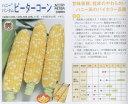 【トウモロコシ】ピーターコーン〔サカタ交配〕/小袋