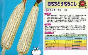 【トウモロコシ】白もちとうもろこし〔固定種〕/小袋