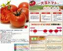 【トマト】ひなた〔みかど協和交配〕/100粒
