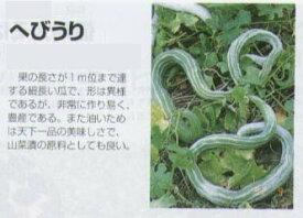 【特殊ウリ】ヘビウリ(へびうり)〔福井シード〕/小袋