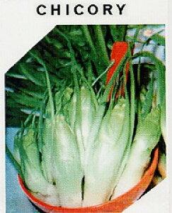 【世界の葉菜】アスパラガスチコリー(プンタレッラ、プンタレラ)/小袋