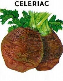 【世界の根菜】セロリアック/小袋
