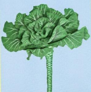 【世界の珍しい野菜】ポルトガルケール/小袋